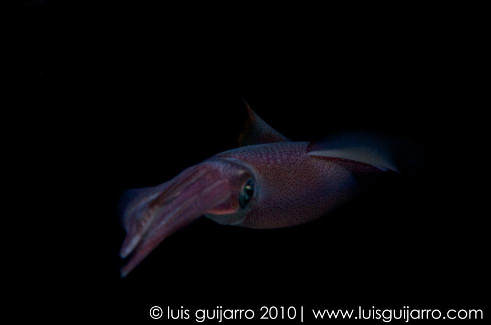 Blurred Squid